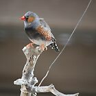 tightrope by joeven