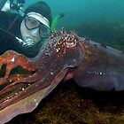 The Cuttle Whisperer. by James Peake Nature Photography.