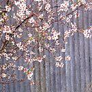 Aldersyde Spring by LouJay