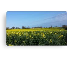 Among the fields of gold Canvas Print