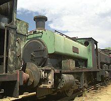 Row of old trains - Dorrigo Steam Railway & Museum by Bev Pascoe