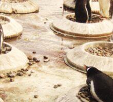 Penguin Paradise Sticker