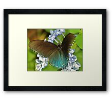 And this is me Blue Morpho Framed Print