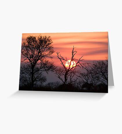 Sabi Sands Sunset Greeting Card