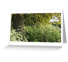 Clouds of Cow Parsley Greeting Card