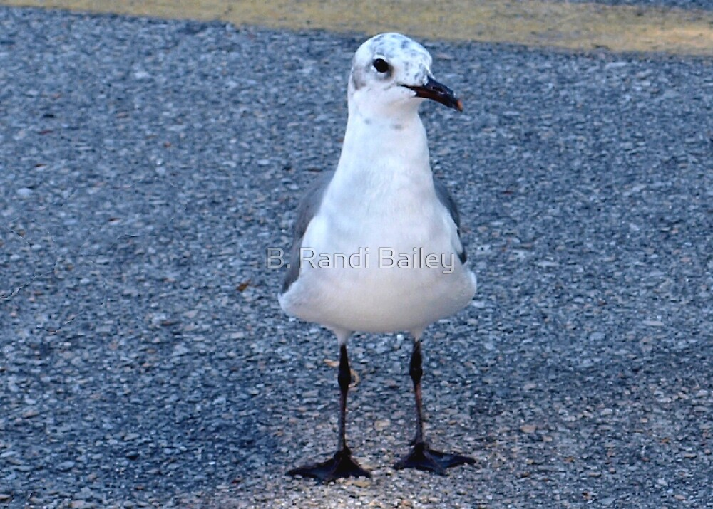 Gull with speckled head by ♥⊱ B. Randi Bailey