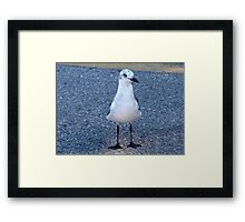 Gull with speckled head Framed Print