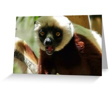 Surprised Wild Coquerel's sifaka (Propithecus verreauxi coquereli) Greeting Card