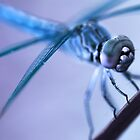 Alien Dragonfly by Douglas M. Paine