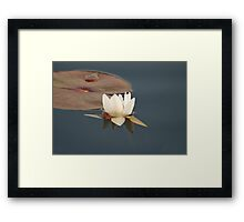 White Water Lily (Fragrant Water Lily) Framed Print