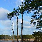Blackwater Landscape by Hope Ledebur