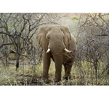 Elephant at Thanda Game Reserve KwaZulu-Natal Photographic Print