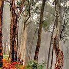 Mist - Falls Creek , Great Alpine Road - The HDR Experience by Philip Johnson