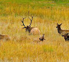 Splendor In the Grass by Nancy Richard