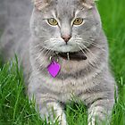 Jose the beautiful cat by Linda More