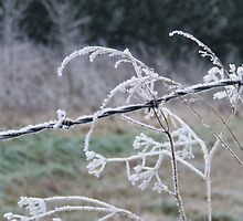iced wire by Gillian  Goodwin