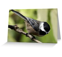 Black-Capped Chickadee Pointing Down Greeting Card
