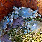 Blue Crabs by Hope Ledebur