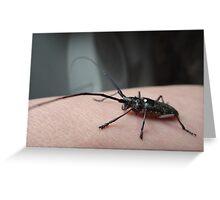 Mystery bug Greeting Card