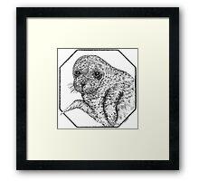 Seal Pup Framed Print