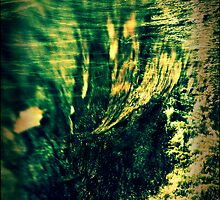 Wood + Ocean by PeggySue67