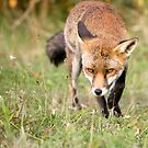 On the Prowl by Peter Denness