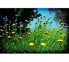 Yellow dots Photographic Print