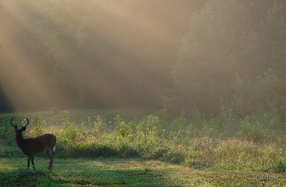 buck at sunrise by dc witmer