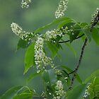 Spring blossoms by vigor