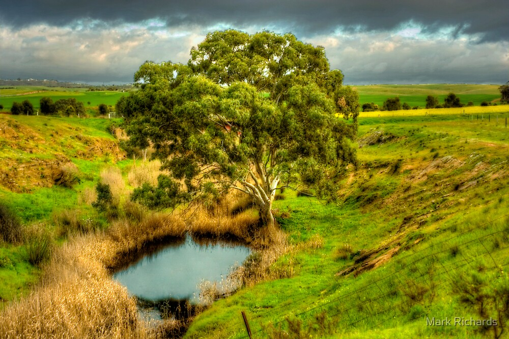 Gum Tree on the Bremer River by Mark Richards
