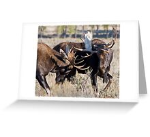 Moose Bulls Sparring Greeting Card