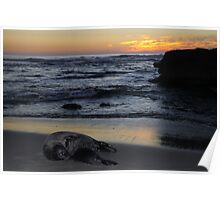 Seals, Sea, and Sunset Poster