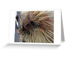 Porcupine Hard At Work Greeting Card