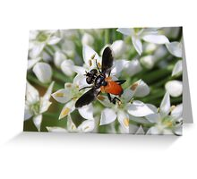 'Odd Bee Fly' Greeting Card