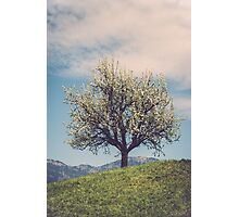 Blossom tree on a hill in Switzerland Photographic Print