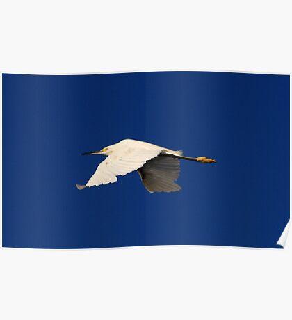 Flight of the White Egret Poster