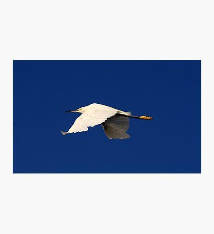 Flight of the White Egret Photographic Print