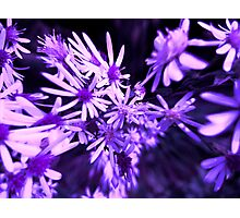 Fantasy in Purple... Photographic Print