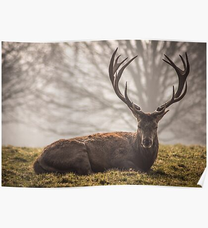 Majestic Stag Poster