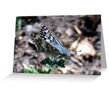 Butterfly ~ Common Checkered Skipper Greeting Card