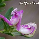 """""""ON YOUR BIRTHDAY"""" - Birthday wishes by Magriet Meintjes"""