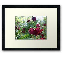 Ragged Beauty :) Framed Print