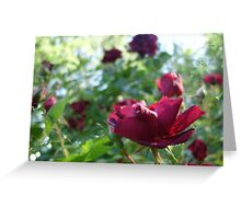Ragged Beauty :) Greeting Card