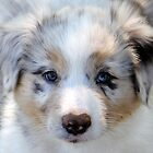 Puppy Beauty. by vette