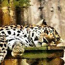 big cat by cynthiab