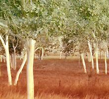 Ghost Gum Corroboree by Holly Kempe
