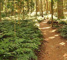 Pathway by Rachel Welsh