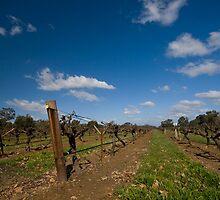 Old Vines - Tahbilk by Di Jenkins