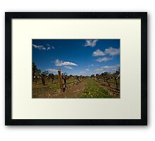Old Vines - Tahbilk Framed Print