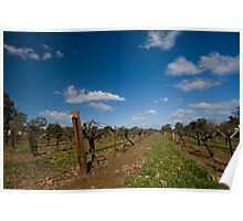 Old Vines - Tahbilk Poster